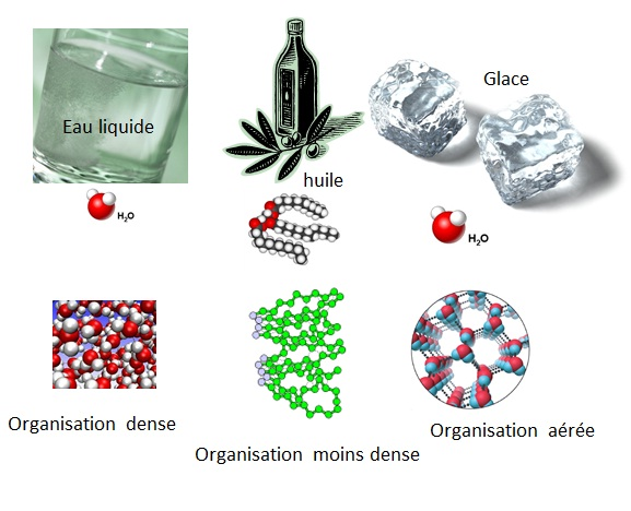 organisation_molecules