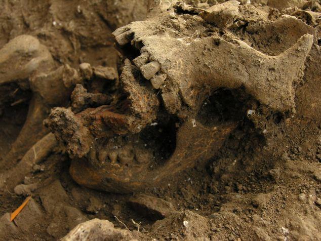 Le crâne d'une personne accusée de sorcellerie avec des dés dans la bouche