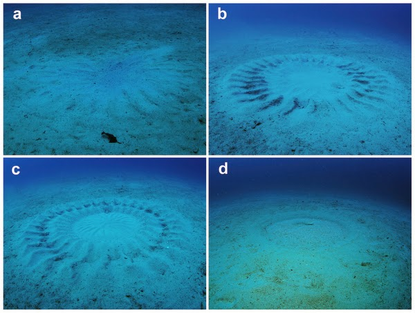 crop circle sous-marin