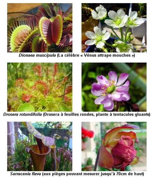 galerie_Plantes carnivores