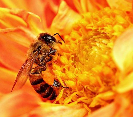 bee_nectar