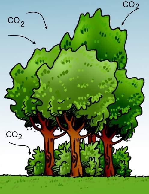 dessins Pascale Effet de serre A arbres