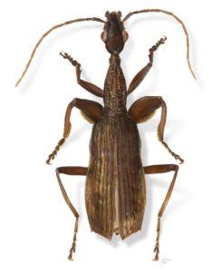 weird-new-species-names-agra-schwartzeneggeri-portrait_70273_990x742