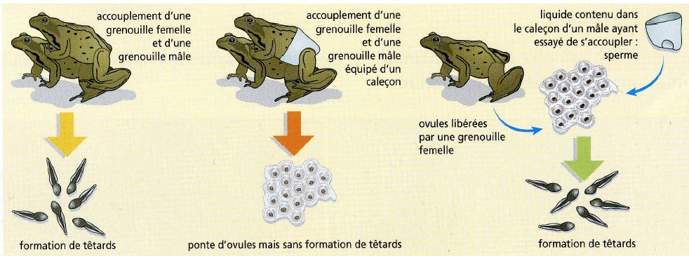 ... reproduction : les expériences folles de Spallanzani | Kidi'science