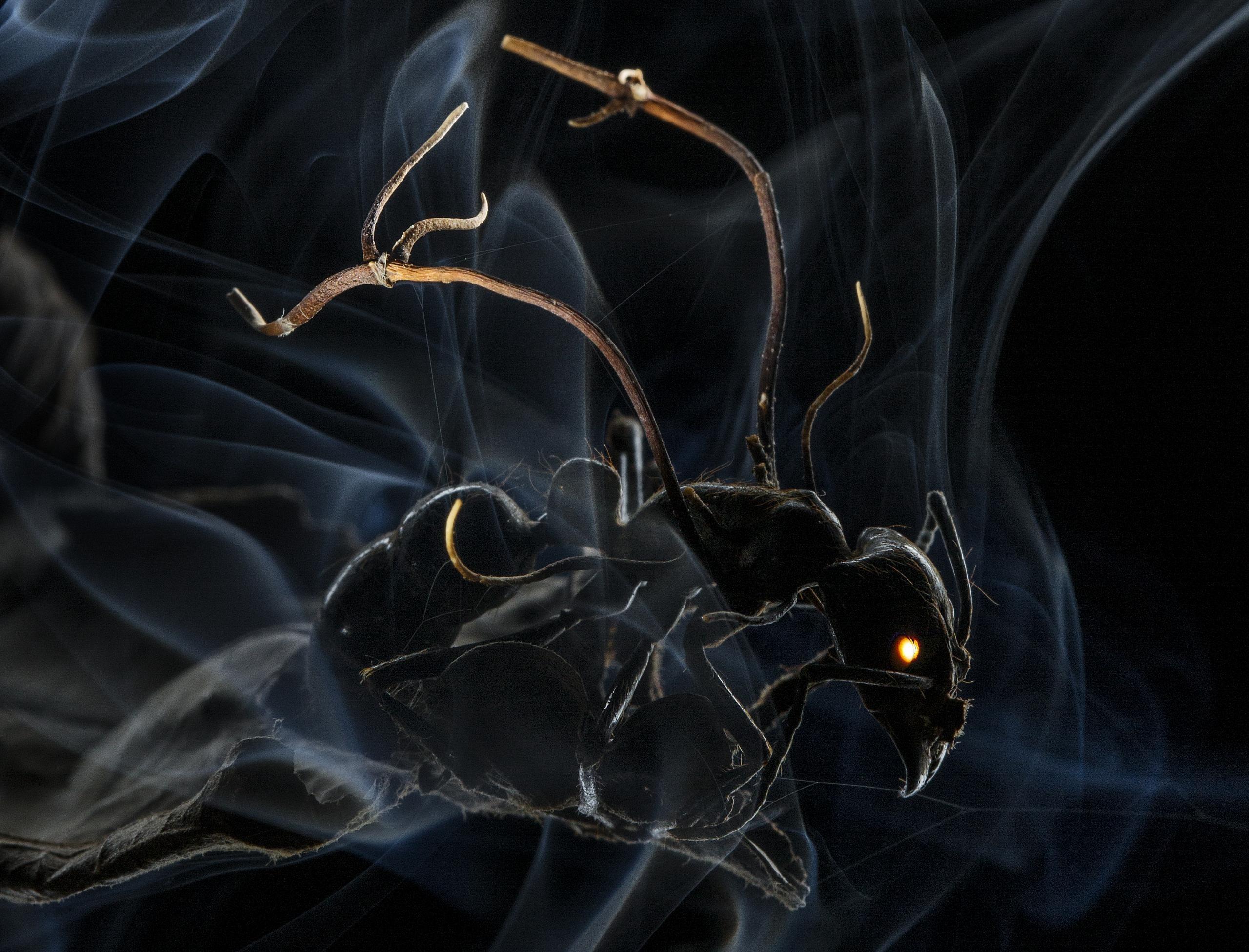 fourmi-infectee-par-un-champignon-controlant-son-esprit-anand-varma